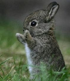 Image detail for -Super cute baby animals pictures 1