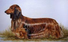 Watercolour tutorial - Dachshund portrait, painting by artist Anne Zoutsos