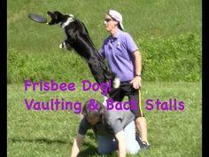frisbee dog training: vaults & stalls - YouTube