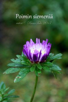 Voimaruno & voimakortit viikko 39: Siemeniä, voimakortti Poimin siemeniä