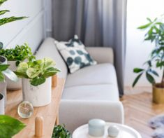 Stylish and boho home interior of living room with wooden shelf, design gray sofa, a lot of plants and elegant accessories. Botany and minimalistic gray home decor with plants. Cozy home decor. Types Of Soil, Types Of Plants, Begonia, Feng Shui Plants, Backyard House, Decoration Plante, Grey Home Decor, Tomato Vegetable, House Plants Decor