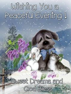 Wishing You A Peaceful Night Sweet Dreams Pictures, Photos, and Images for Faceb. Cute Picture Quotes, Cute Good Night Quotes, Good Night Thoughts, Good Night Funny, Good Morning Funny Pictures, Good Night Prayer, Good Night Friends, Good Night Blessings, Good Night Messages