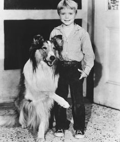 "Jon Provost became a child star after playing little Timmy Martin across from the iconic Long-Haired Collie in the late television show ""Lassie. Rough Collie, Collie Dog, Dog Tv Shows, Jon Provost, Sean Leonard, Famous Dogs, Vintage Tv, Dog Show, Old Tv"
