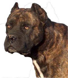 Alano Español / Spanish Bull dog / Alano Espanol #Dogs #Bulldog #Puppy