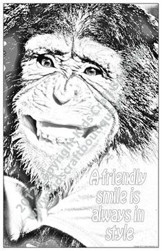 7 unique 11 x 17 inch posters in each pack, created from original animal photographs and ready for your child to color Animal Posters, Motivational Sayings, Photographs, Photos, Child, Animals, Color, Unique, Art