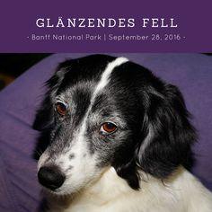 Wir alle wünschen uns glänzendes Fell für unsere Hunde - wenn's mal nicht klappt, gibt's hier Hilfe