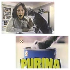 #SoCalTv #southerncaliforniatv #southerncalifornia #tv #commercials #vintage #classic #retro #catfood #cats #catsofinstagram #catstagram #purina #ralstonpurina #wetfood #pussy #pets