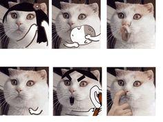 Crazy cat - 9GAG