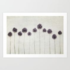 Abstract, minimalist flower photography.