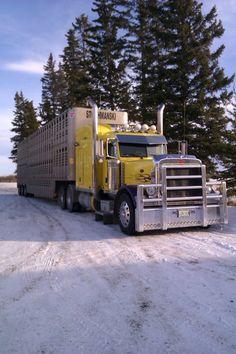 2007 379 Peterbilt owner: Lars Knutson hauling for Stochmanski Livestock Hauling, Saskatchewan.