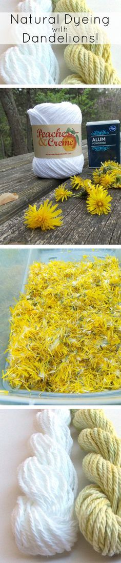 Use dandelions and alum to dye white yarn — the result is a lovely shade of yellow!