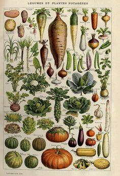 Vegetables, Larousse pour tous, c. 1910