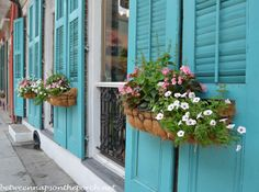 Beautiful planters in New Orleans