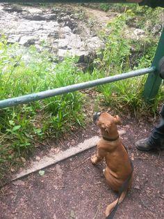 Amzy Cowan - Admiring the view at new lanark.