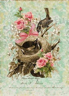 """Shabby FuFu"" ~ Bella Bird 8 X 10 Waxed Canvas Print. $18.00, via Etsy."