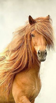Such a beauty. Sometimes I envy horses hair.