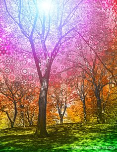 Rainbow Trees by Larry Carlson