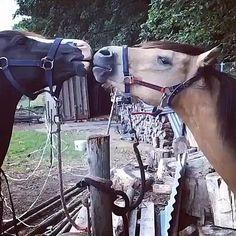 Cute Horses, Horse Love, Beautiful Horses, Funny Horse Videos, Funny Animal Videos, Rare Animals, Funny Animals, Cute Funny Dogs, Cute Little Animals