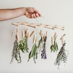 Been looking ways to air dry herbs? What to do with dried herbs? Here's your awesome answer. Even dried herbs still have all the medicinal properties ✨ and how cute can this look hanging in your kitchen? Herb Drying Racks, Drying Herbs, Practical Magic, Natural Living, Fresh Herbs, Soy Candles, Trees To Plant, Plant Hanger, Dried Flowers