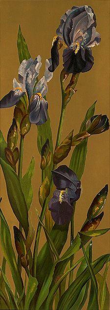 H.K. Ely  Irises  19th century.  By Boston Public Library  Boston Public Library via Flickr