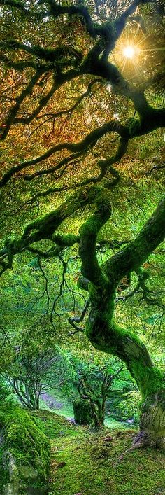 Japanese Maple at the Portland Japanese Garden, Oregon | Incredible Pics