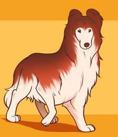 how to draw a collie dog