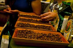 Fotografía: Destinos Reps - Plantación de café - Grano listo (Costa Rica)