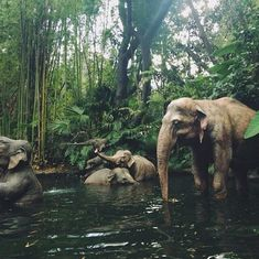 Image about beautiful in adventure by Serine Daouk : elephant, animal, and nature image Cute Creatures, Beautiful Creatures, Animals Beautiful, Beautiful Images, Majestic Animals, Animals And Pets, Baby Animals, Cute Animals, Elephas Maximus