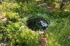 Laurent Perrier Chatsworth GardenChelsea Flower Show 2015Awarded Gold Medal & Best In Show Garden Pond Design, Garden Pool, Garden Planters, Water Garden, Garden Landscaping, Farm Gardens, Small Gardens, Low Maintenance Garden Design, Laurent Perrier