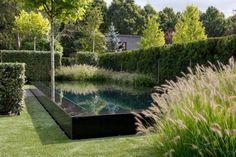 minimalistischer garten-hecken pflanzen-geschnitten wasserbecken-rechteckig