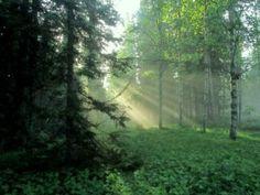 Kesäaamun ihana valo