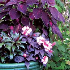 Plant some of these beauties for great garden color, even in shade