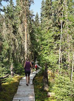 Hike to Grey Owl's cabin in Prince Albert National Park, #Saskatchewan.
