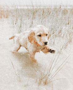 Cute Dogs And Puppies, I Love Dogs, Doggies, Cute Little Animals, Cute Funny Animals, Cute Animal Pictures, Dog Pictures, Retriever Puppy, Cute Creatures