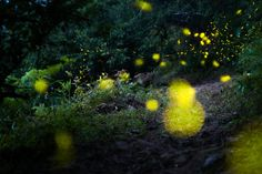 Best of 2012: Nature - Firefly by Ren Chang, via 500px