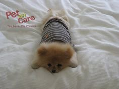 Monday face   Visit Our Website For #OnlineShopping of #PetProducts -www.petencare.com