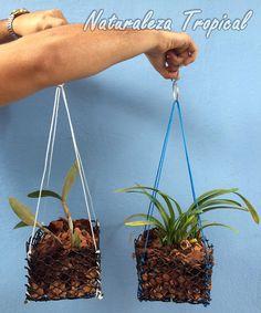 Naturaleza Tropical: Crea las macetas perfectas para tus orquídeas con ...