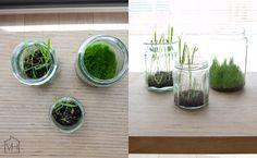 Valkoinen Harmaja - pääsiäisruoho Spring, Flowers, Plants, Sweet, Craft, Flora, Plant, Royal Icing Flowers, Flower