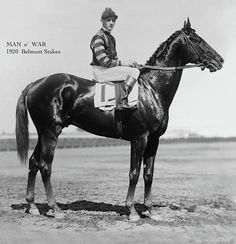 Belmont Stakes Photograph - Man O War, Belmont Stakes, 1920 by Thomas Pollart Majestic Horse, Beautiful Horses, The Belmont Stakes, Horse Magazine, Man Of War, Thoroughbred Horse, Racehorse, Horse Racing, Equestrian