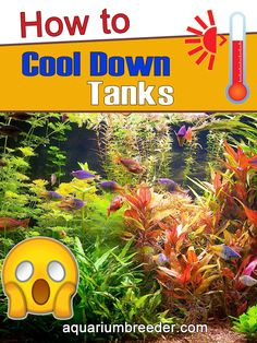 How to Cool Down Tanks 7 ways to cool down aquariums Tips, Pros and Cons Shrimp Tank, Aquariums, Tanks, Cool Pictures, Nerd, Tanked Aquariums, Shelled, Military Tank, Otaku