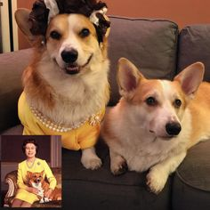 The 40 Most Important Corgis Of 2015