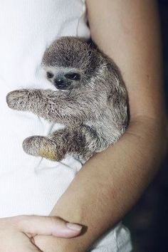 Newest Free baby animals sloth Strategies While each of our dad and mom are most likely delighted along with pleased to check out us mature in addition to get ri Baby Animals Super Cute, Cute Little Animals, Cute Funny Animals, Cutest Animals, Cute Baby Sloths, Cute Sloth, Baby Animals Pictures, Cute Animal Pictures, Fluffy Animals