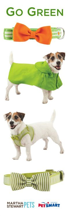 Go green with our #MarthaStewartPets Spring 2014  at #PetSmart. Nellie desperately needs a raincoat...
