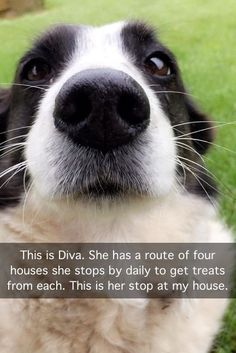 Funny Dogs Wants a Treat  http://www.luvbat.com/picture-3714-funny-dogs-wants-a-treat-.html  https://www.facebook.com/TruthAndHilarities/ #meme #funny #haha #awesome #memes