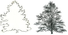 There are so many kinds of trees.  In this lesson I'll give you four examples to draw in pencil or ink.  Then I will do a quick watercolor ...