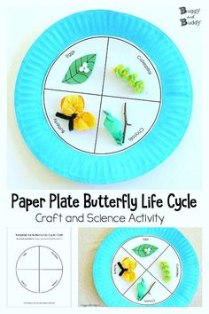 Preschool Paper Plate Butterfly Life Cycle Craft for Kids (with FREE printable template)- Fun spring and science activity about butterflies and caterpillars for… - Preschool Children Activities Science Activities For Kids, Science Fair Projects, Science Ideas, Sequencing Activities, Life Science, Chenille Affamée, Preschool Crafts, Crafts For Kids, Life Cycle Craft