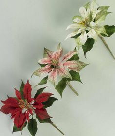 Poinsettia - Alan Dunn sugar craft