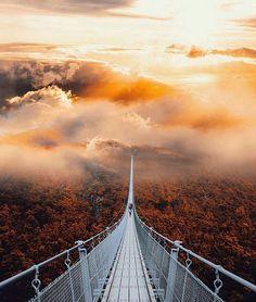 Geierlay suspension bridge, Mörsdorf, Germany ♡