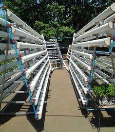 GreenCityFarms build systems on an old tennis court. #greenfingers  #greencity  #green #verticalhydroponics  #verticalgarden  #verticalfarming  #nft #hydro #aquaponics  #hydroponics  #johannesburg  #jozi #cityofgold #sustainable #tenniscourt #mint #chives #lettuce #oak #watercress #cityfarms #water #hydro #spinach #allyearround  no #drought can stop us by greencityfarmsjozi