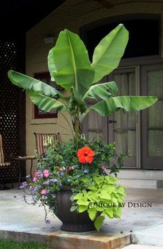 Tropical flowers add height and color. Elephant ears and hibiscus. Tropical flowers add height and color. Elephant ears and hibiscus. Tropical Landscaping, Tropical Plants, Tropical Flowers, Backyard Landscaping, Tropical Gardens, Landscaping Ideas, Exotic Plants, Luxury Landscaping, Landscaping Company